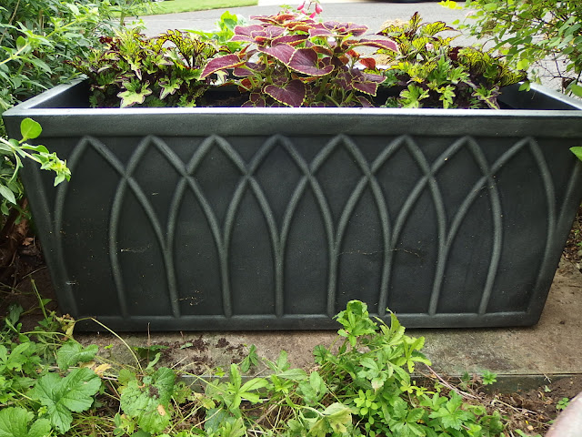 Large trough with three coleus