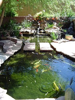 Koi Ponds During The Summer