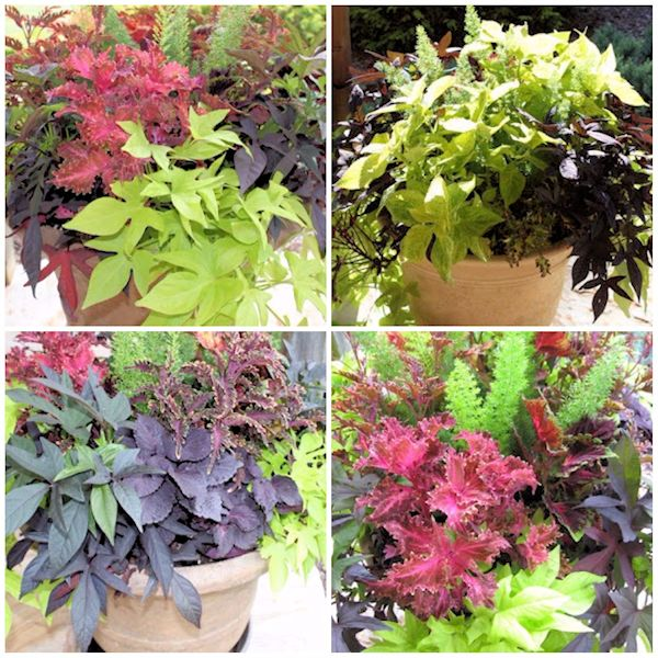 Container Gardening The Perfect Patio Planter