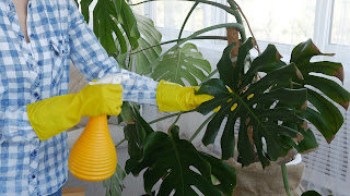 Home Plant Care