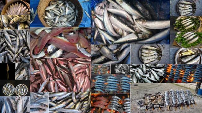 تحميل 27 صورة لسمك السردين بجودة عالية