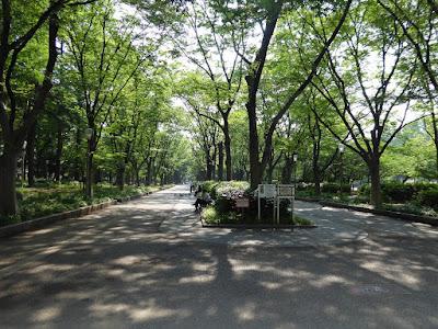 靭公園のケヤキ並木