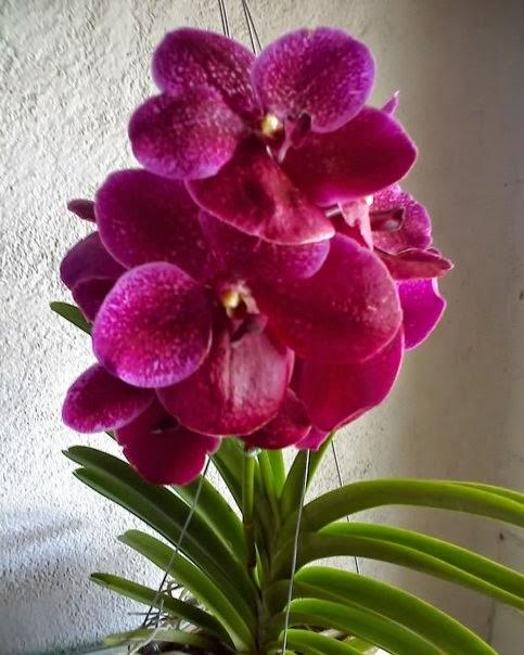 Floristerias En Medellin Ikebana Arreglos Florales