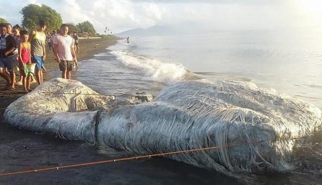 Τρομακτικό πλάσμα ξεβράστηκε σε ακτή των Φιλιππίνων