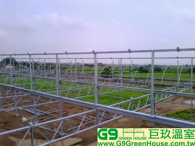 13.鋸齒鋼骨加強溫室,水槽結構與通風口上層柱及上橫樑結合完成外觀