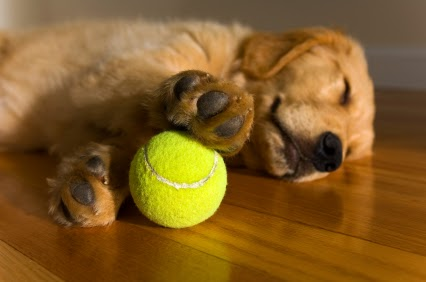 Funny dog heaven tennis ball joke photo