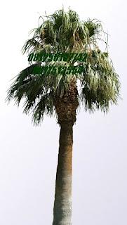 Palm Clifornia | Jasa Tukang Taman Surabaya