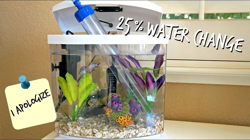 Image The Benefits of Betta Fish Care Water Change