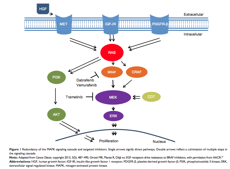 Cancer Biology: A negative side effect of BRAF targeted ... Dabrafenib