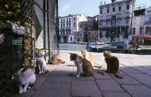stray cats venice