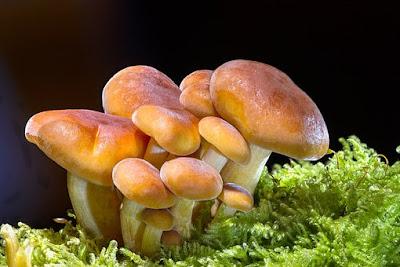 manfaat-sayuran-jamur-bagi-kesehatan,www.healthnote25.com