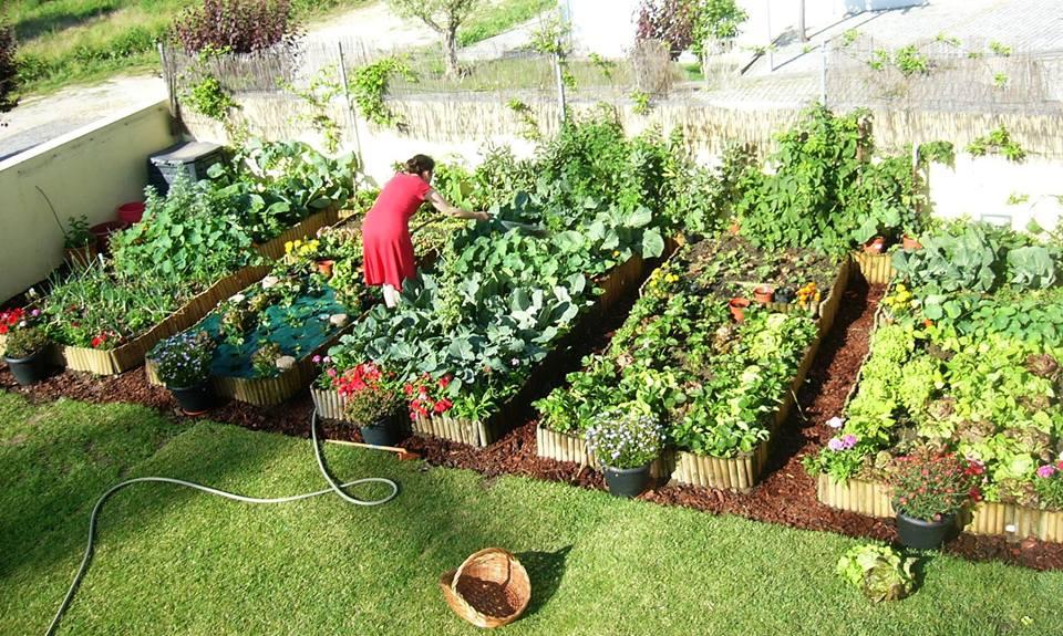 cuidar da sua horta com esta aplicação cheia de dicas de cultivo de