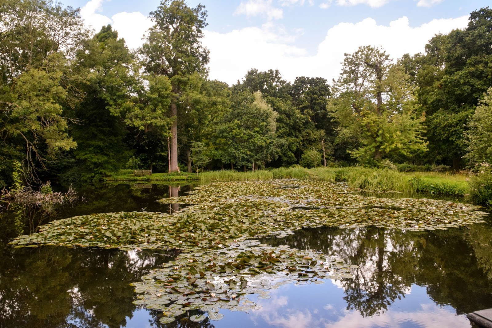 Enjoy your time with beautiful places: Waterhouse Woodland Garden in ...