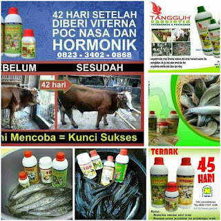 Sedia Viterna NASA Di Kabupaten Aceh Jaya 081360421856