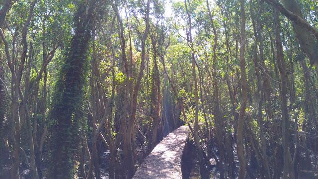 1 gốc con đường rừng tràm làng nổi Tân Lập