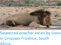 http://sciencythoughts.blogspot.co.uk/2018/02/suspected-poacher-eaten-by-lions-in.html