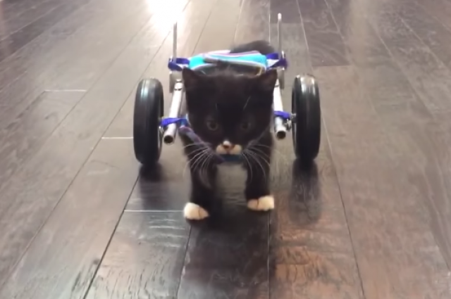 3D-Printed-Wheelchair-For-Disabled-Kitten