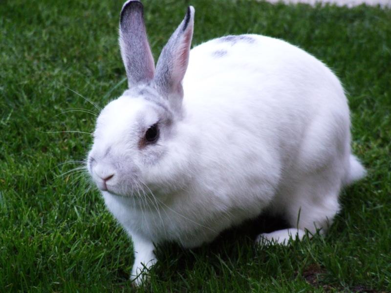 World Tourism: Rabbit