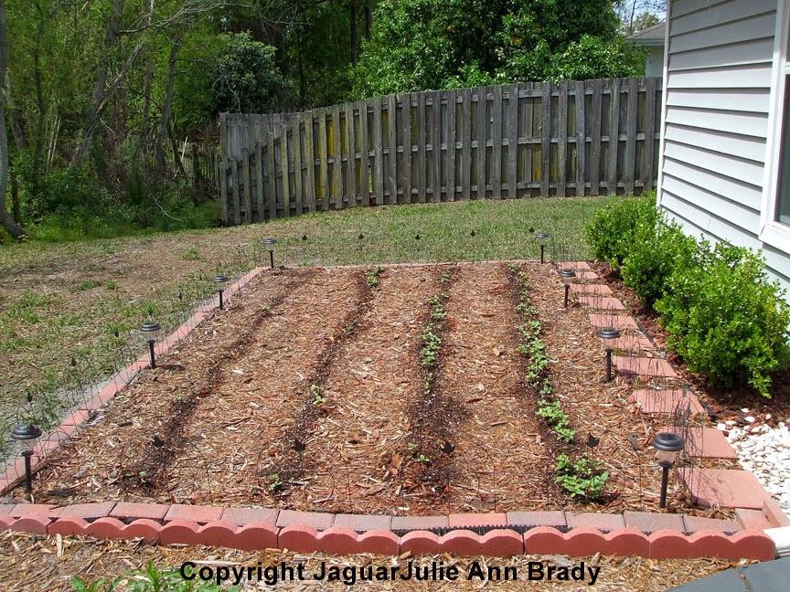 Adding 8 Solar Lights to Sunflower Garden Perimeter 033114