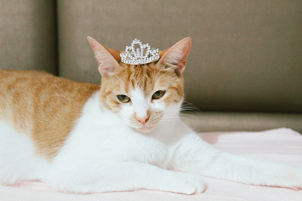 Pregnant Lili The Cat, crowned