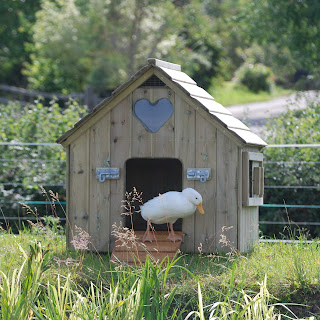 Timber Duck Houses Made in the UK
