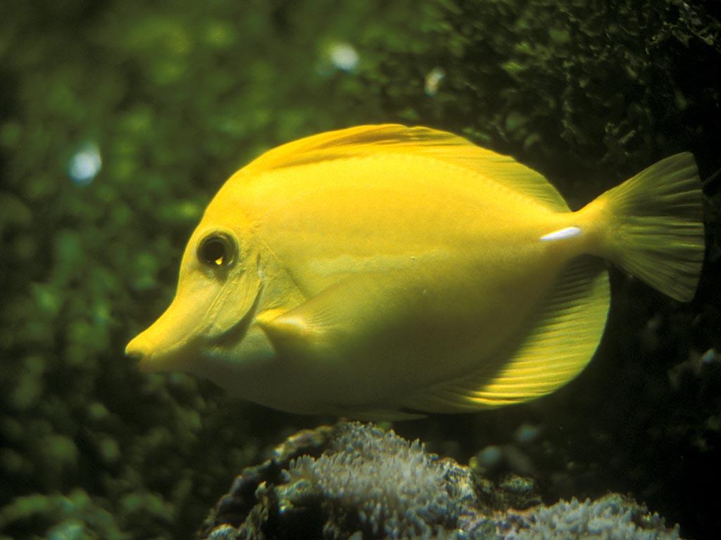 Beautiful Cute Wallpapers Gambar Gambar Ikan Yang Cantik 47 Foto