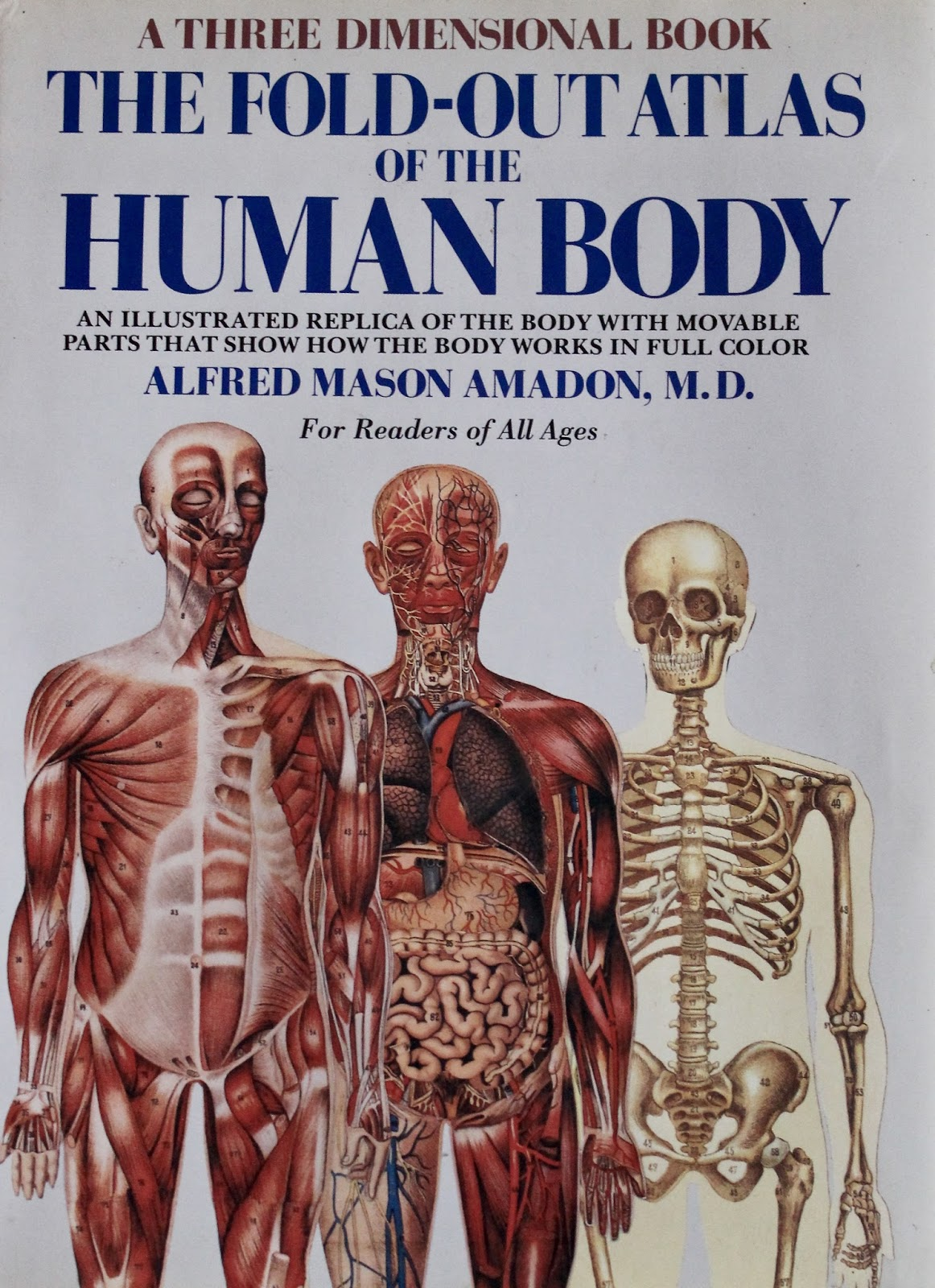 The Human Body Illustrated Vintage And In Shocking 3d