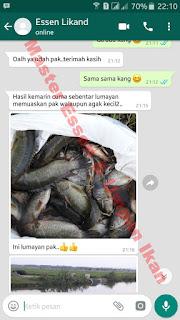 Umpan Serbuk Ikan Nila Babon
