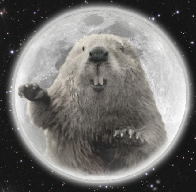beaver-moon-in-the-month-of-november