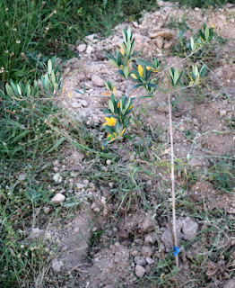 Planted in the orchard
