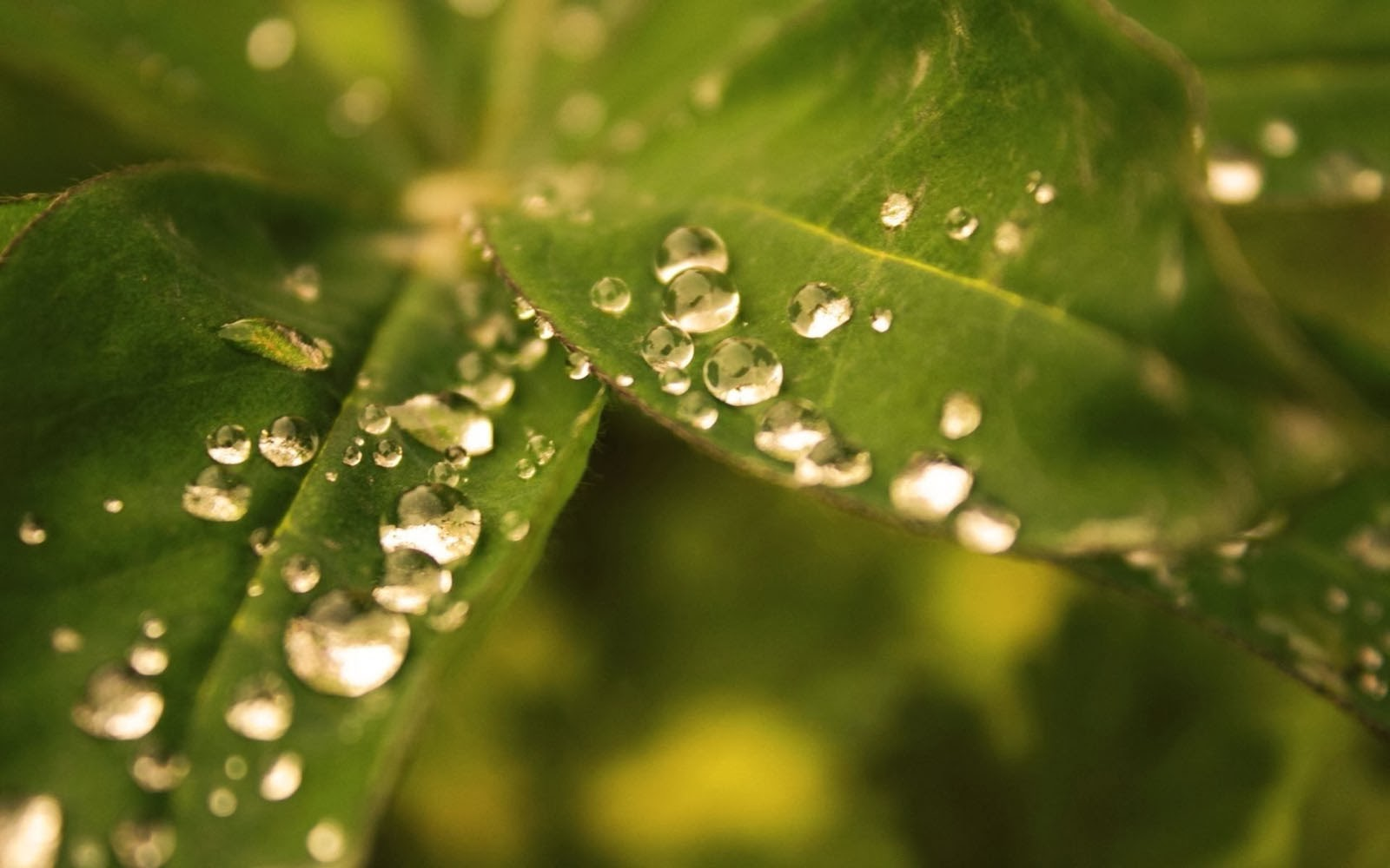 Wallpapers Gallery Falls Wallpapers Rain Drops On A Leaf