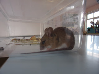 stubbington study centre mouse hunt