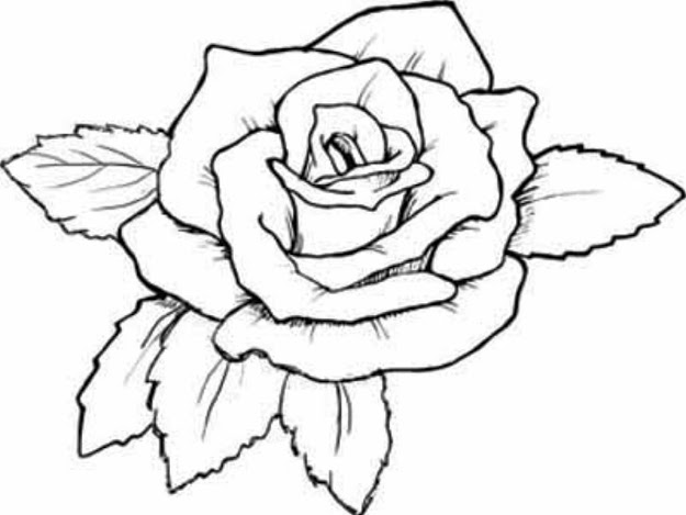 Coloring Pages Of Roses Coloring Pages Of Roses And Hearts Best Roses  Coloring Sheets Free Free