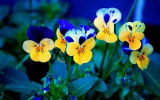 Beautifull Amazing Photography HD Desktop Wallpaper Foto