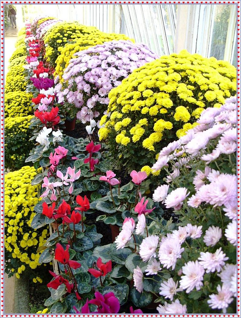 Ornamental Pepper Plants And Winter