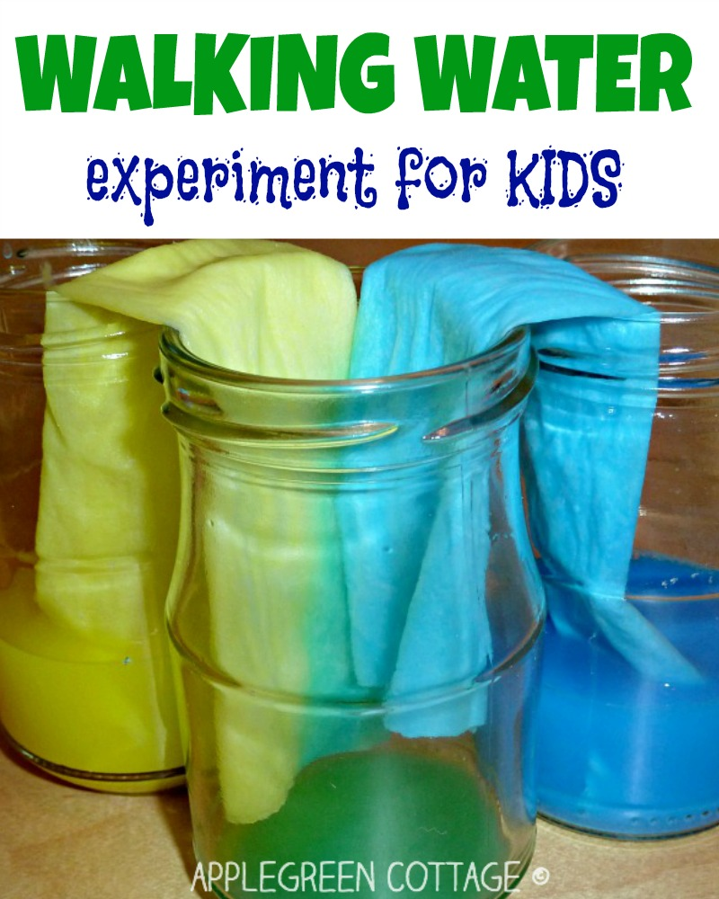 Walking water - experiment with colors for kids - AppleGreen Cottage