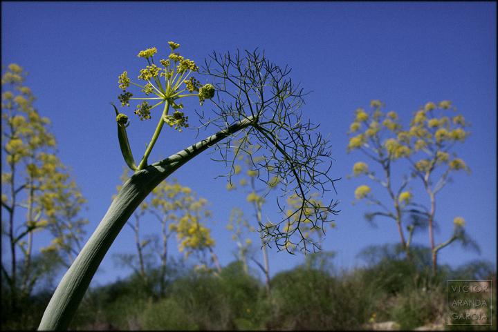 fotografia,naturaleza,flores,planta,murcia,paisaje