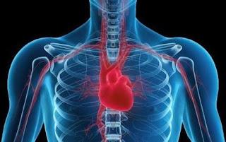 Bahaya Banyak Duduk Pada Kesehatan Jantung