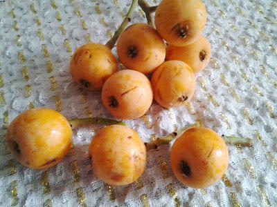 yenidünya meyvesi faydaları
