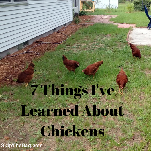 7 Things I've Learned Since Having Chickens