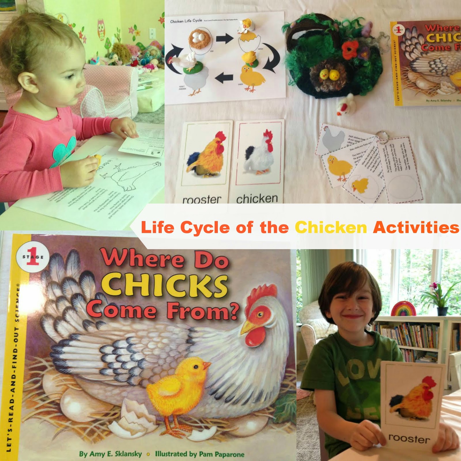life cycle of a chicken, Science, homeschooling, spring activities, unit study, handmade , Montessori learning, Waldorf, and more www.naturalbeachliving.com