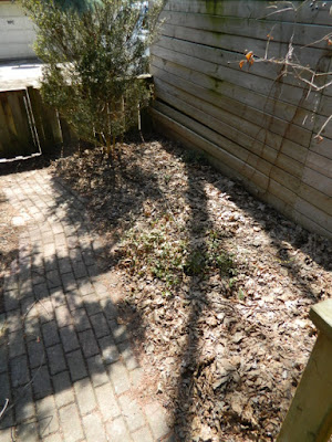 Toronto Riverdale Backyard Spring Cleanup Before by Paul Jung Gardening Services--a Toronto Gardening Company