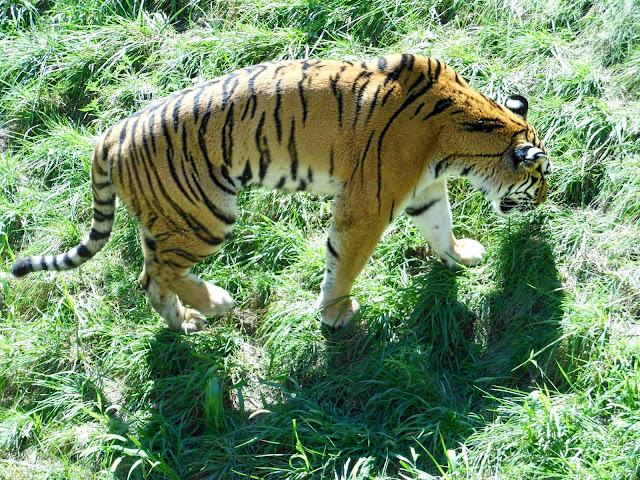 Activities to do in Ohio. Mainly Columbus, Ohio but also surrounding areas as well as Cincinnati, Cleveland, Sandusky, and Dayton. Date night. Ohio Adventures. Local dates. Activities. Central Ohio. Tiger at the Columbus Zoo