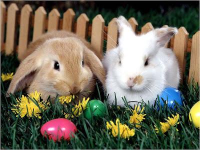 Resultado de imagem para coelhos de páscoa