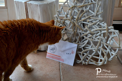 Katze Mimi mit Kuvert