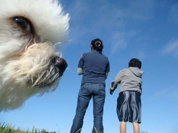 """Gặp gỡ 20 loài động vật thích chụp ảnh """"phá đám"""""""