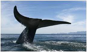 Penjelasan-singkat-kenapa-ikan-paus.jpg