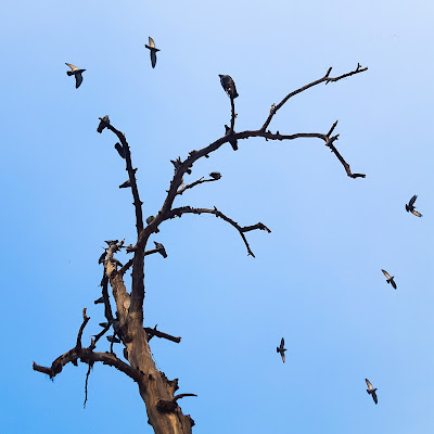A Minimalist Photo of a tree and flying birds shot by Samsung Galaxy S6 Smart Phone