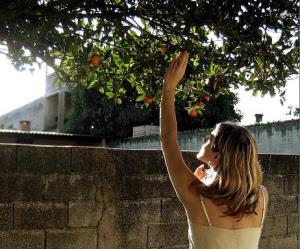 pomi fructiferi in orase