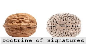 https://foreverhealthy.blogspot.com/2012/05/doctrine-of-signatures-foods-that.html#more